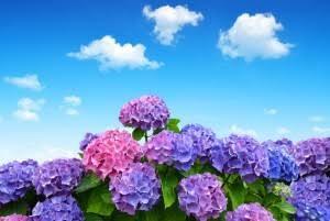 五月晴れ 青空